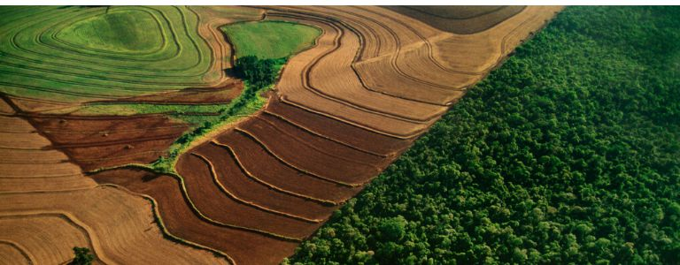 Agriculture expansion causes deforestation