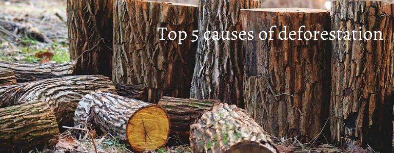 causes of deforestation