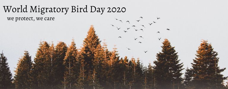 World Migratory Bird Day 2020, Birds Connect Our World
