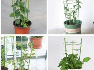 Garden Plant Support Cages