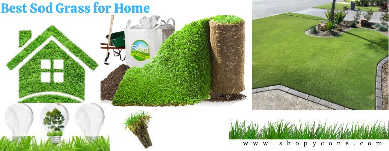 Best Sod Grass for Home